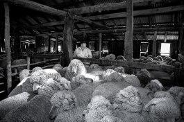 The Shearing Shed 1