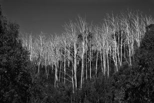 Ghosts of the Bushfire