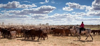 Anna Creek Cattle yards