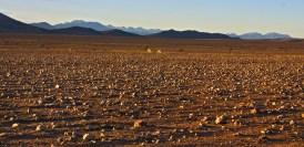 Barren Plain
