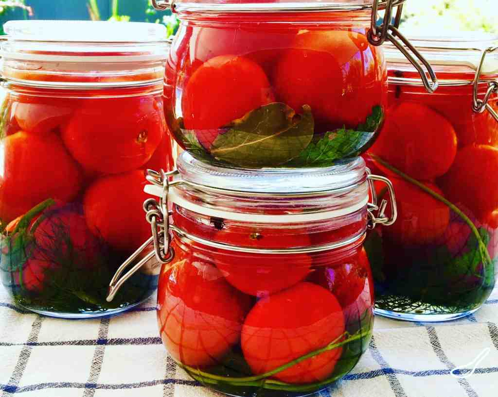 fermented tomatoes pickled