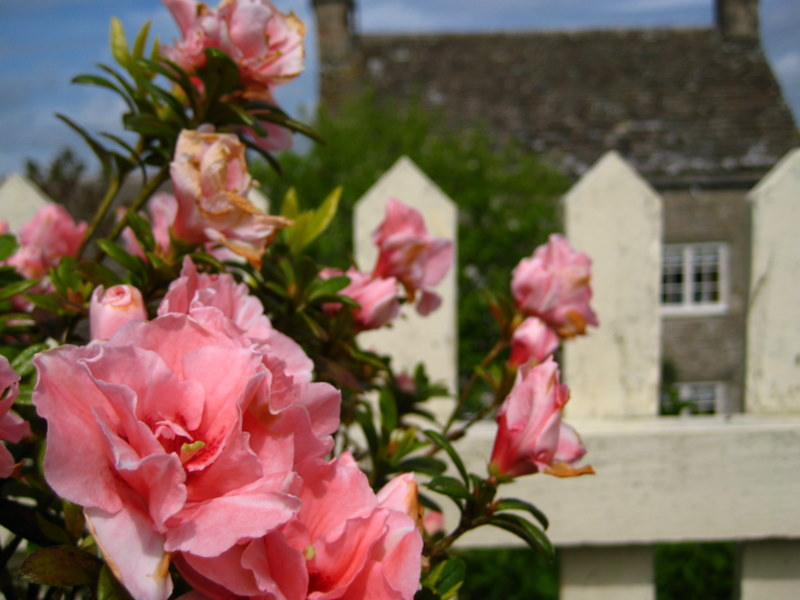 Trevor's house & garden