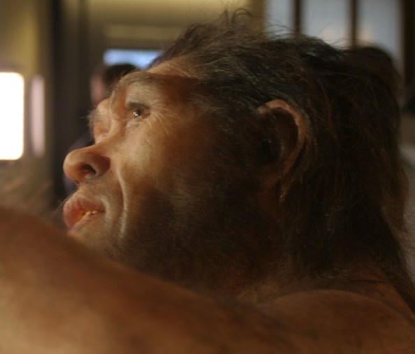 daynes-erectus-reconstruction-closeup-2013