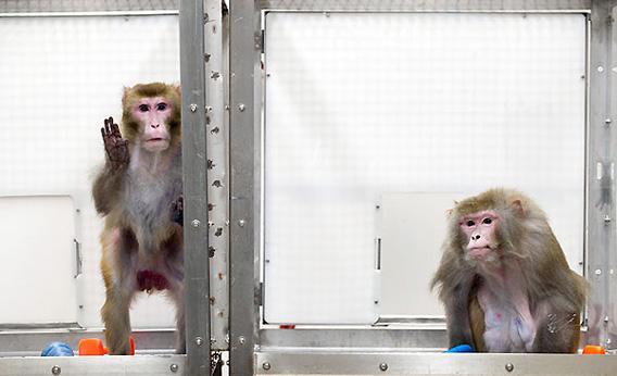 CR_monkeys