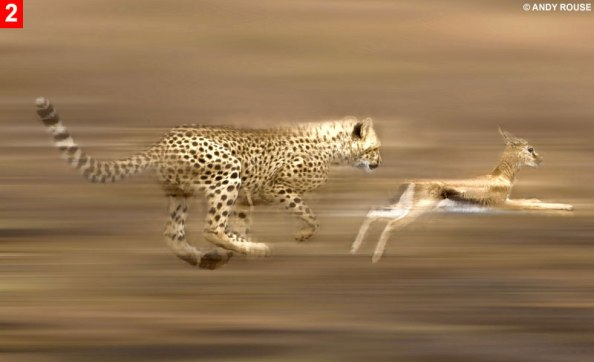 cheetah-run