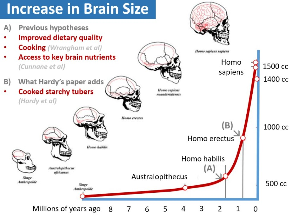 brain_size_evolution1