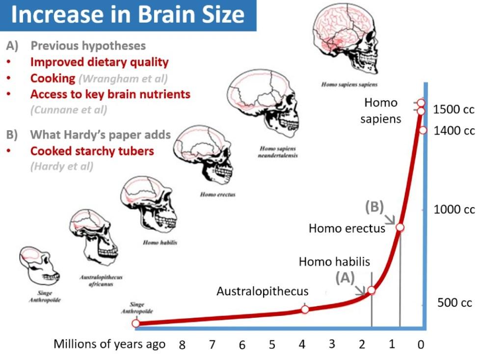 brain_size_evolution1
