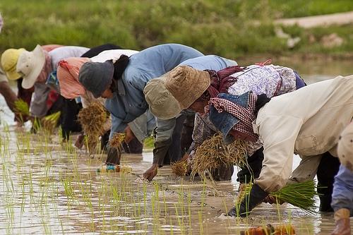 cambodia-agriculture-20193675-l