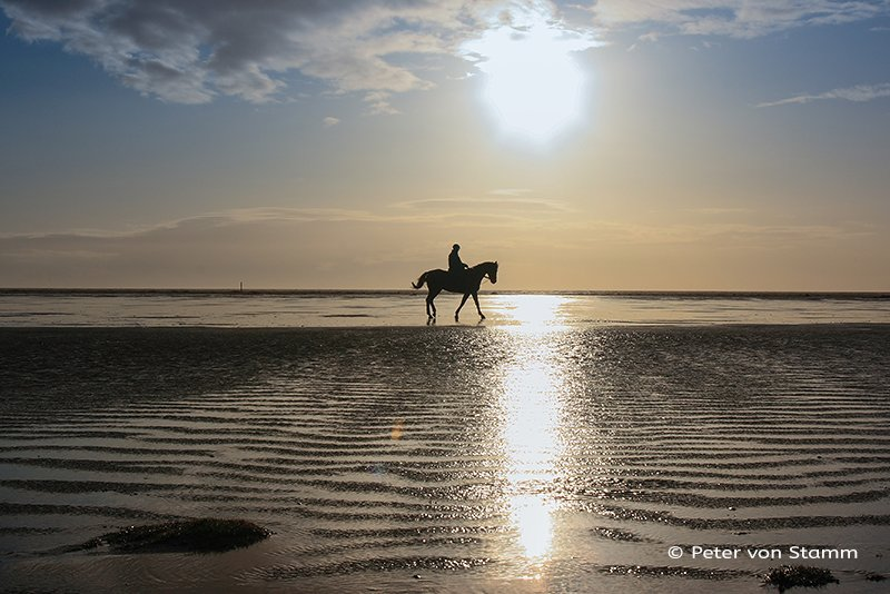 St Peter-Ording horse