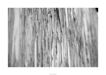 Nikon D90_29035__DSC0310-border