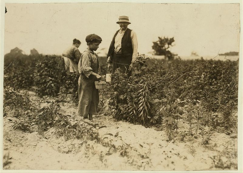 """Johnnie Yellow, a young Polish berry picker on Bottomley Farm, Rock Creek, near Baltimore, Md. Says he is 10 years old and has gone to Biloxi, Miss. for 9 years (with family) and has worked there in winter and here in summer for three years. He is stunted, being only about 39 inches high. Many of these children are stunted."", 1909 - Lewis Hine - <i>Library of Congress</i>"