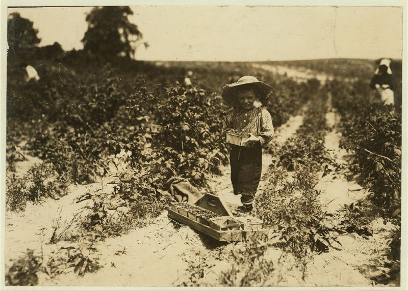 """A four year old helper in the berry field, Rock Creek, near Baltimore. Mother said, 'He helps little.'"", 1909 - Lewis Hine - <i>Library of Congress</i>"