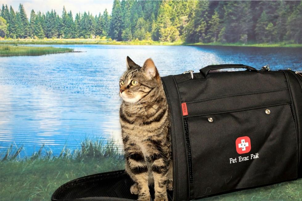Emergency Survival cat kit