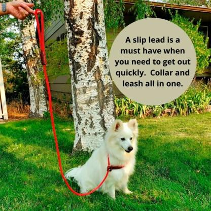 Slip Lead, collar leash, british style,