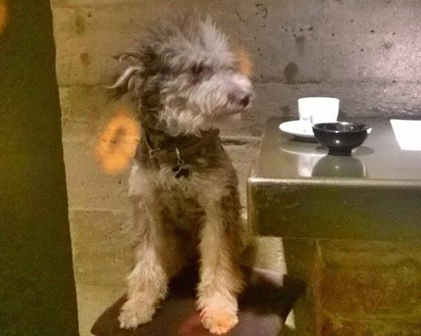 napušten pas petafce