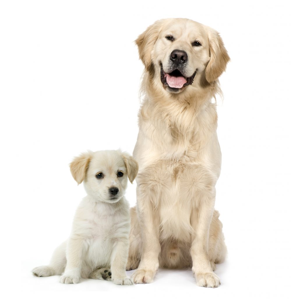 Dog and Puppy smiling and sitting