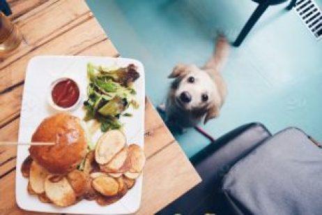 dog looking human foods