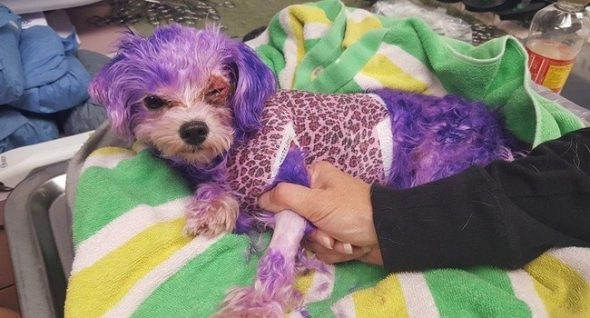Violet Nearly Died From Injuries Caused By Human Hair Dye