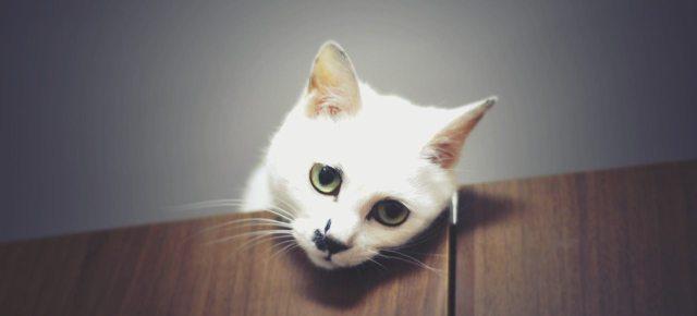 tužna-mačka