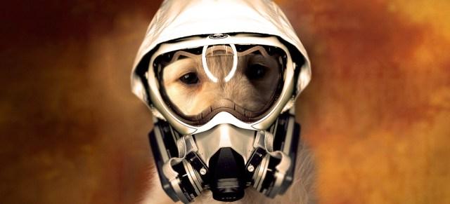 kućni-ljubimci-pas-sa-gas-maskom