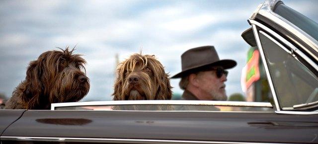 putovanje-sa-psom