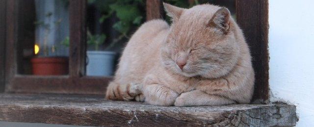 mačka-spava-na-prozoru