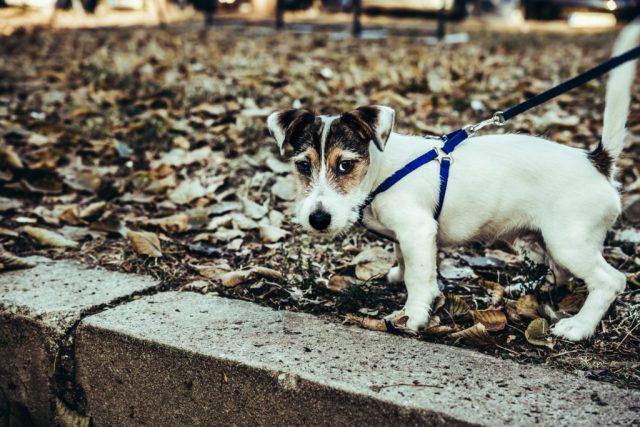 pas-napolju-u-šetnji