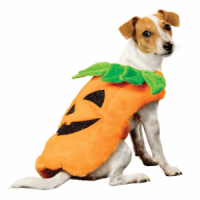Cute Halloween Costumes for Dogs | Pet Hooligans