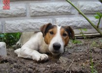 How To Stop Dog From Digging Under Fence