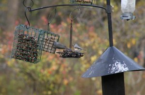 What is the Best Bird Feeder Pole with Pulley