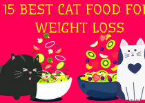 15 best cat food for weight loss with my mind-blowing experience
