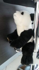 Petits jeux rigolos: Panda aux toilettes
