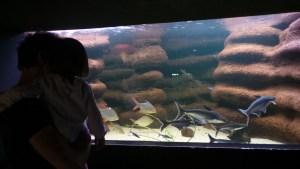 Alsace, aquarium des trois vagues