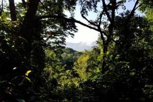 Education, pygmées, forêt africaine