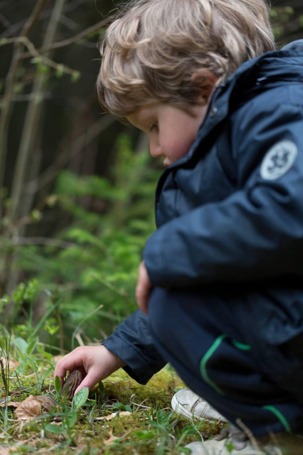 Randonnées gourmandes du printemps : la cueillette des morilles  ©petitbivouac