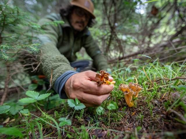 Comment trouver enfin des champignons dans la forêt