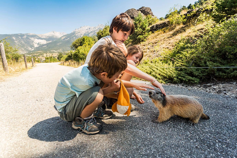 Voir des animaux sauvages en France - les marmottes