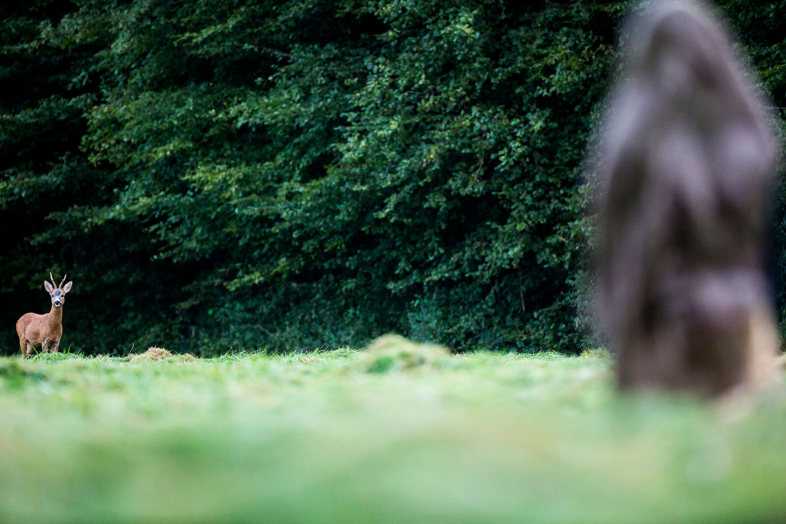 Technique de l'affut pour observer les animaux sauvages
