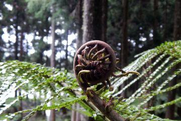 actu or petite forêt