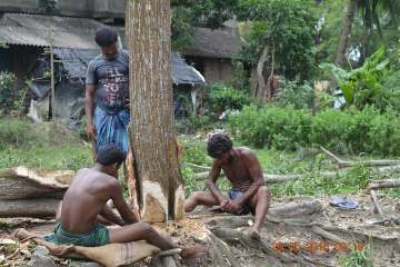 comment couper un arbre
