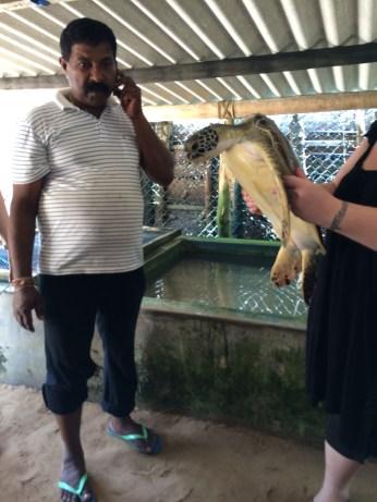 Victor Hasselblad Kosgoda Turtle Hatchery
