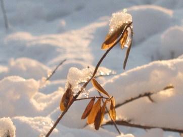 Snow, light, leaves