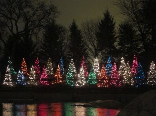 """These trees did the wave to the rhythm of """"Jingle Bells."""" I think they're cutest all lit up."""