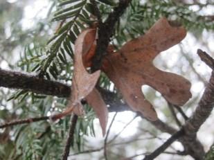 Leaftree2