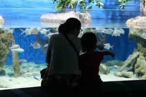 L'aquarium, une sortie en famille idéale par temps de pluie