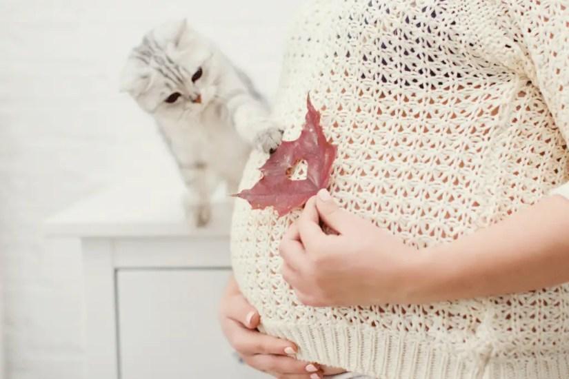 Chat jouant avec une feuille sur le ventre d'une femme enceinte