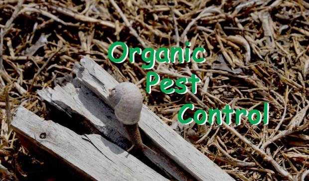 Organic Pest Control Header