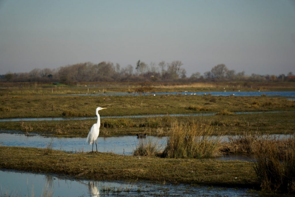 oiseau sauvage dans le marais