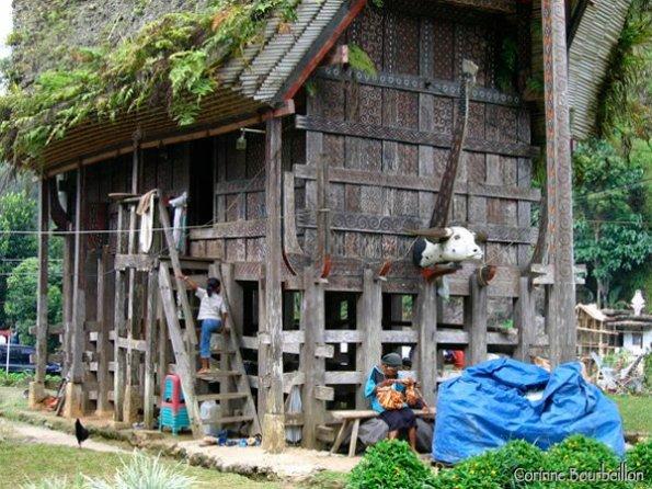 Maison traditionnelle tongkonan. Pays Toraja, Sulawesi. Juillet 2007.