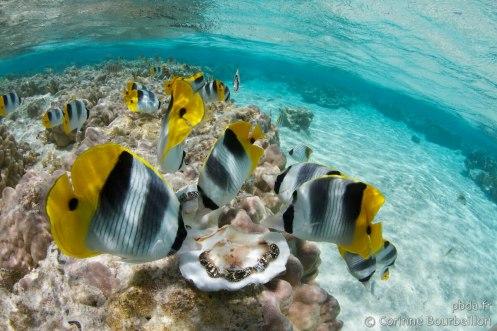 Maupiti. Polynésie, octobre 2012.